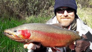 Big Taupo spawning rainbow trout flyfishing Hinemaia River fishing Guides