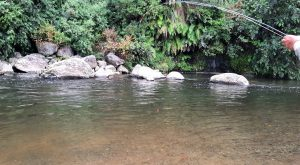 NZ wild trout fly fishing