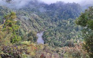 North Island NZ Backcountry Fishing River